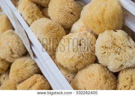 Natural Sponge.natural Sea Sponges For Cleaning And Washing Closeup.spa And Wellness- Anti-celluliti