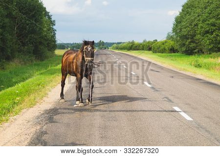 A Lone Brown Horse Crossing The Road. Runaway Horse In The Countryside