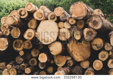poster of Stack of logs. natural wooden background with timber cuts. log wall