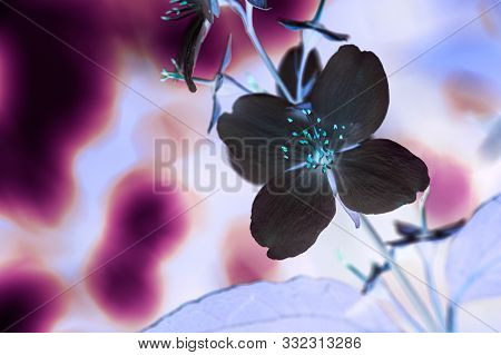 Abstract Floral Background, Inversion Of Neon Color With Copy Space