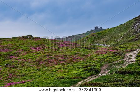 Pink Rose Rhododendron Flowers On Summer Mountain Slope And Pip Ivan Mount Peak Behind With Observat