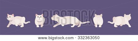 White Pedigree Cat Sneaking. Active Healthy Kitten With Beautiful Fur And Light Coat, Cute Funny Pet