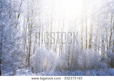 Sunset In Winter Forest. Snow On The Tree Branches. Frozen Branch Of A Tree In A Blue Sky Nature