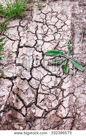 Cracked Ground, Path, Soil With Dry Grass. Ecology Concept. Cracked Earth Texture Background With Gr