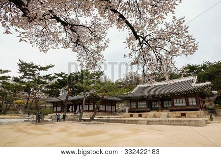 Seoul,south Korea April 9 2019 :tourist Taking Picture With Beautiful Cherry Blossom At Tongmyeongje