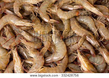 Countless Fresh Shrimp. Fresh Marine Food. Proteins Of Animal Origin.