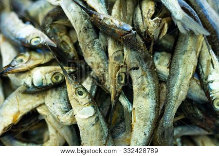 Countless Small Silver Fish. Proteins Of Animal Origin.