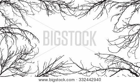 Background Of Silhouettes Of Branches Of Different Trees. In The Center Is Space For Text. Applied C
