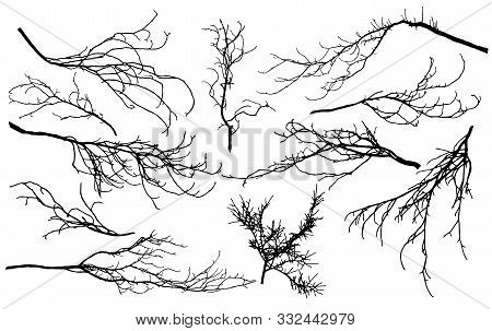 Set Of Silhouettes Of Branches Of Different Trees (chestnut, Poplar, Linden, Maple, Oak, Etc.). Vect