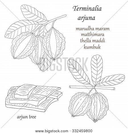 Herbs, Spices And Seasonings Collection. Vector Hand Drawn Illustration Of A Medicinal Plant Termina