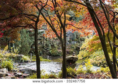 Fall Forest Landscape. Dry Fall Leaves Covering The Ground And Forest Fall Trees Under Soft Sunlight