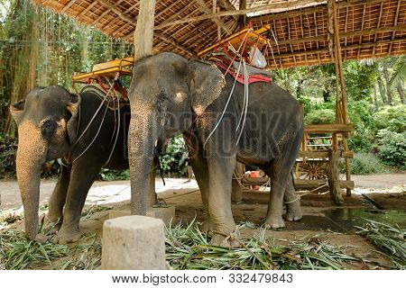 Tamed Cute Elephants With Saddle Standing At Zoo.