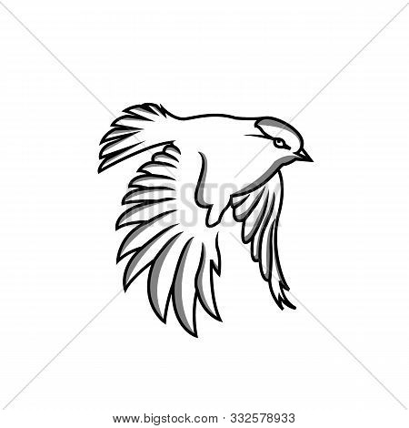 Bird: Hand Drawn Bird. Sketch Of Sparrow And Order Bird. Vector Illustration Of Sparrow And Order Bi
