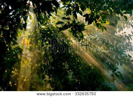 Green Tree Leaves With Sun Rays In Foggy Morning Forest. Close-up Sun Light Beams In Green Foliage I