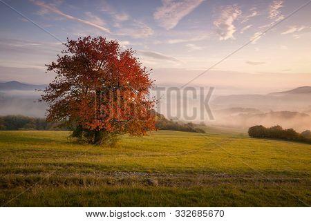 Fall In Slovakia. Meadows And Fields Foggy Landscape Near Banska Bystrica. Autumn Colored Cherry Tre