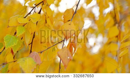 Leaves Of Plants In The Fall. Bright Sheet Background For Design.