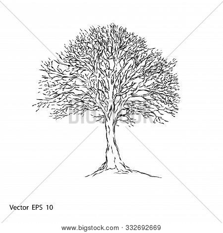 Naked Tree .Autumn Tree Without Leaves .vector Illustration  .