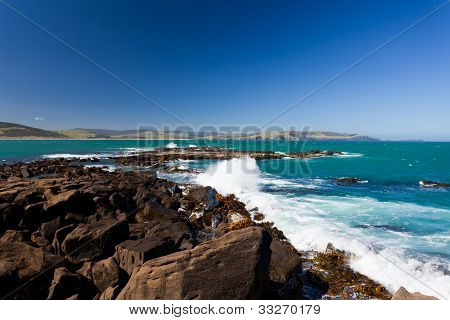 Curio Bay, South Coast of New Zealand South Island