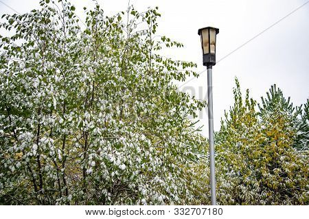 Lantern And Tree With Leaves Covered In Snow During The Day. Snow Covered Leaves In Winter. Bush Wit