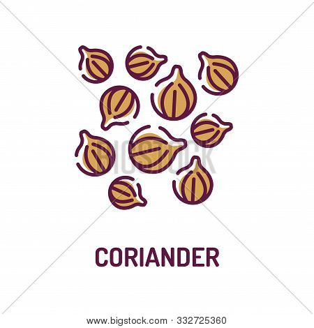 Coriander Color Line Icon. Spices Product Sign.