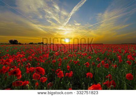 In Image Sunset Over Poppy Fields In Summer