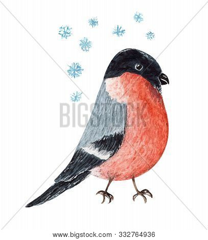 Cute Red And Black Watercolor Christmas Bullfinch Bird. Cartoon Painting Winter Robin And Snowflakes