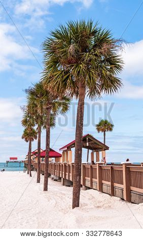 Clearwater Beach, Florida, Usa 11/6/19 Palm Trees On The Beach Alongside Pier 60 On A Sunny Fall Day
