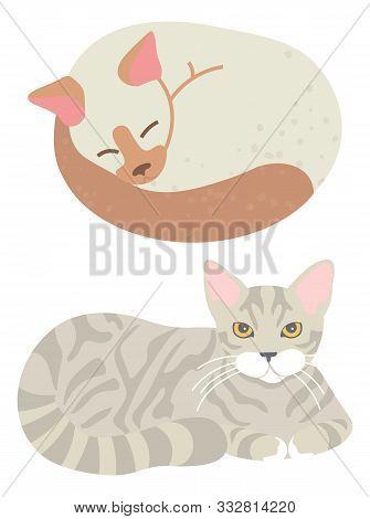 Domestic Animal, Feline Look, Sleeping Tomcat, Home Cat, Mammal Character. Tabby Kitty, Adorable Whi