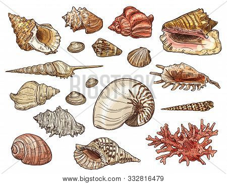 Seashell And Coral Sketches With Vector Sea Beach Shells Of Marine Snail, Clam And Conch, Mollusk, S