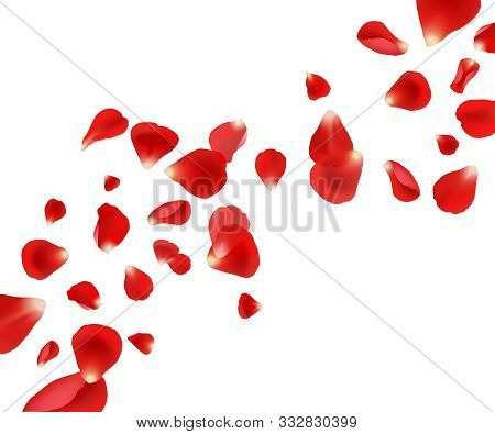 Petal Background. Flying Rose Petals Wedding Beautiful Template Design For Cards Invitation Vector P