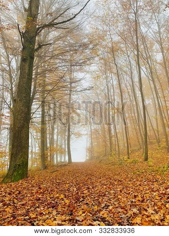 Tall trees and fallen leaves on the ground in autumn season