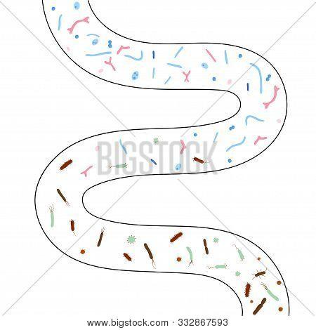 Vector Isolated Illustration Of Human Microbiota. Probiotics - Good Beneficial Bacteria. Lactobacill