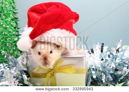 A Rat In A Christmas Hat With The Gift On The Christmas Tinsel. New Year Tree. The Concept Of The Ne