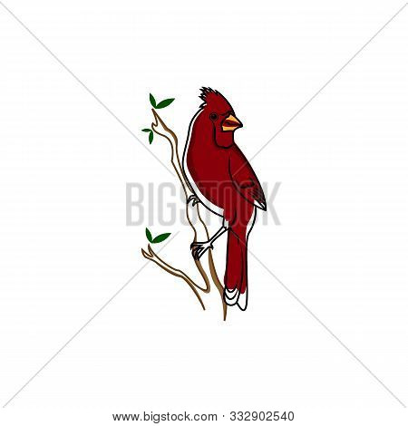 Red Cardinal Bird On A Winterberry Branch Vector Illustration. Christmas Winter Bird On A Tree Graph