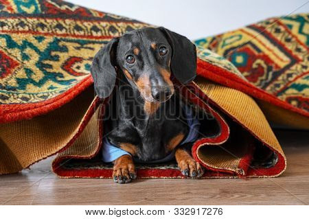 A Small Pet With A Sense Of Humor Hid Under The Carpet And You Can Only See The Animals Head