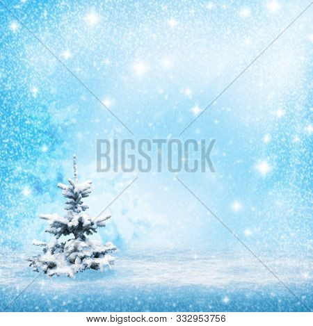 Natural Winter Background. Winter Trees Background. Winter Forest Background Desktop Image. Space Fo