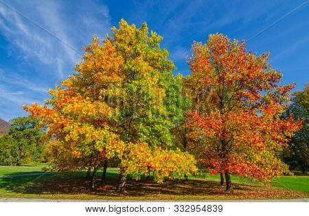Colorful And Vivid Autumn Colors And Bright Blue Sky In The Park