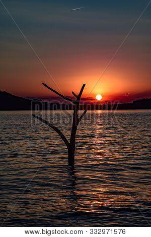 Galho seco emerge do lago ao por do sol poster