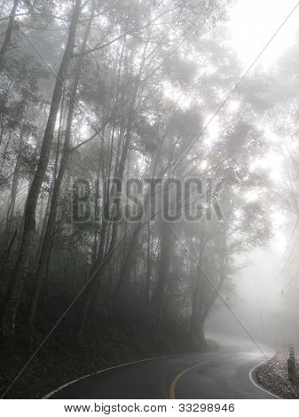 Curve Road In The Mist