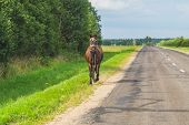 Lonely brown horse crossing the road. runaway horse in the countryside poster