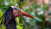 the face of a northern bald ibis in closeup, Endangered bird specie from Africa t-shirt