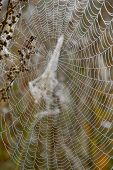 Autumn dew on the web - a frequent guest poster