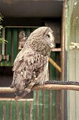 Wild life. Gorgeous big bird sit in cage. Calm and peaceful. Ornithology concept. Owl outdoor shot. Owl typical species for many countries. Owl in zoo cage. Animal shot capturing owl. poster