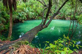 Glassy Water Of Green Springs Park In Florida.