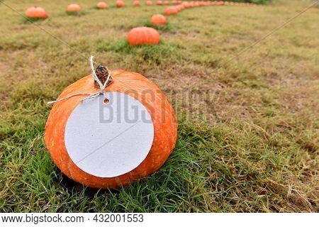 Fall Harvest Cornucopia. Pumpkin In Autumn Season. For Thanksgiving And Halloween Decoration Event.