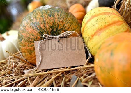 Pumpkin With Tag. Fall And Harvest Season.