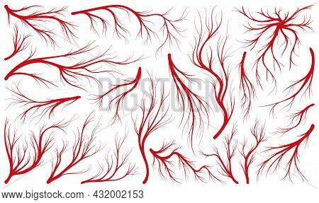 Vein Of Human Vector Line Icon Set . Collection Vector Illustration Artery Of Blood On White Backgro