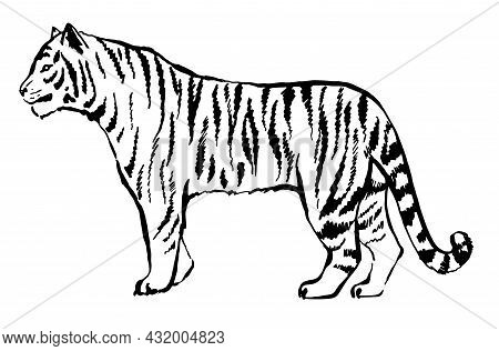 Tiger Drawn With Ink From The Hands Of A Predator Tattoo Logo. Tiger Goes Isolated On White Backgrou