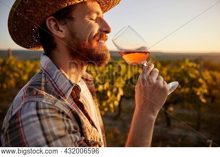 Side View Of Adult Bearded Male Winemaker In Checkered Shirt And Straw Hat Smelling Wine In Wineglas