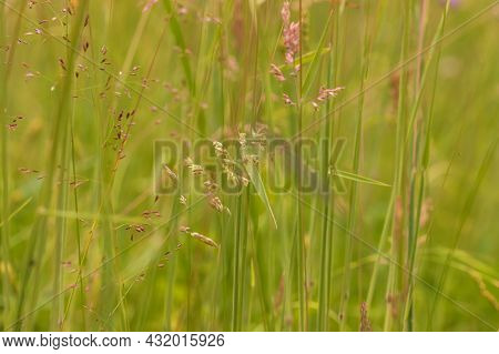 Green Meadow On Which Grows Brown Grass.